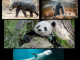 40+ Webcams of Animals and Insects from Your Favorite Zoos and Attractions